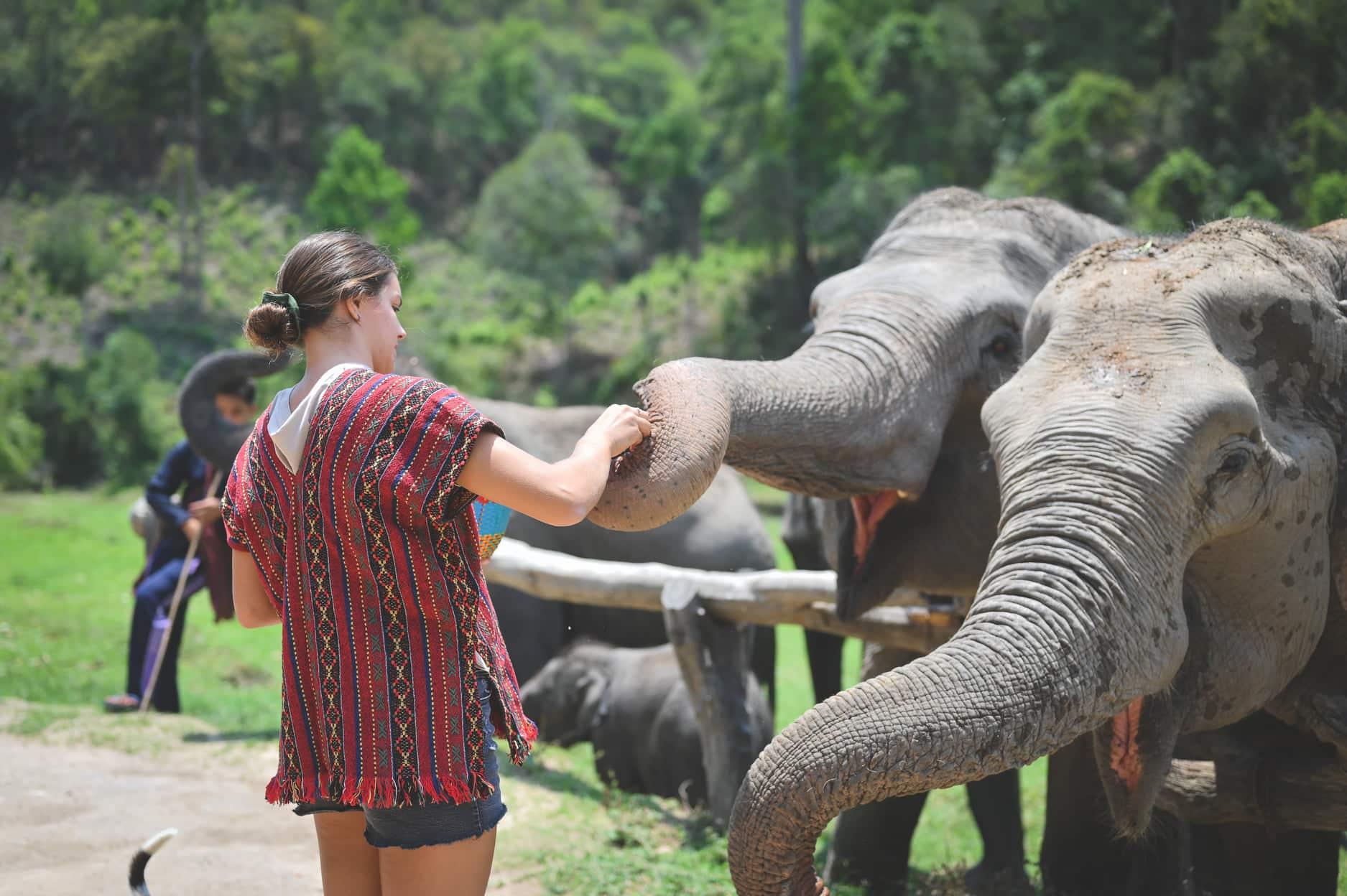 Into the Wild Elephant Camp