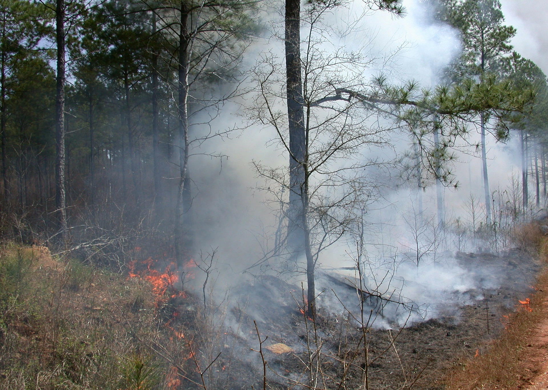 Slash and Burn Agriculture practise in Chiang Mai