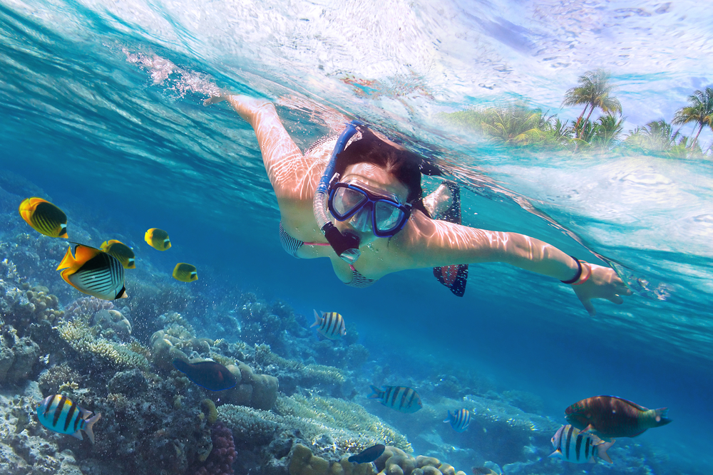 Snorkelling and Diving